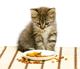 Small kitten eating dry cat food.