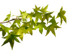 Fototapety branche et feuilles