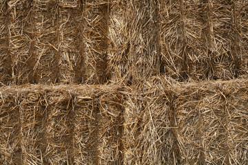 PAILLE - straw (1)