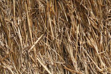 PAILLE - straw (2)