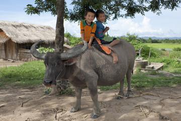asiatische Kinder sitzen auf Wassebüffel
