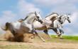 three stallion runnig fast