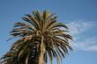 Palm & Blue Sky