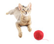 Cute kitty with wool ball isolated
