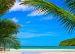 Palms frame on the beach background