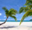 Couple palm on the beach