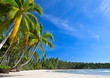 Palm on the empty beach