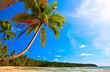 Palms near beach