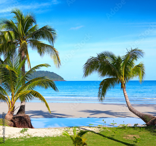 Palms on the tropical beach