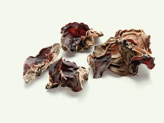 Black Fungus (Mu-Err, Judasohr)