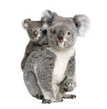 Fototapety Portrait of Koala bears,  in front of white background