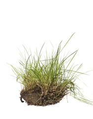Gras isolated on a white background