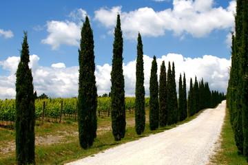 Zypressenallee, Wanderweg, Wolkenhimmel, Toskana, Italien