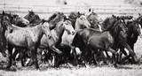 Fototapete Pferd - Herd - Nutztiere