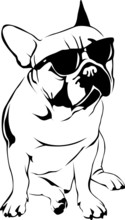 Cool Boy - French Bulldog