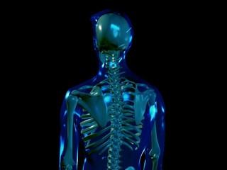 Skeleton - loop (PAL)