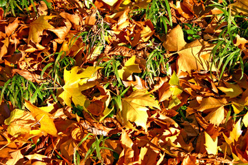 Green grass and Autumn leaves