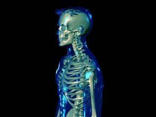 Skeleton - loop wobble (PAL)