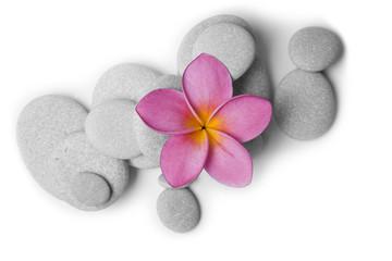 Piedras y Flor