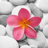 Fototapeta Buddyzm - spokojny - Kwiat