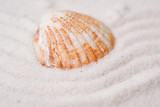 Shells in a marine sand poster