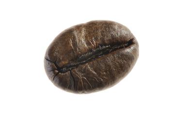 The coffee grain