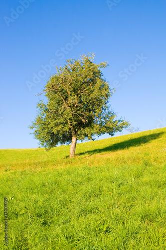 Foto op Canvas Pistache Idyllische Wiese mit Baum