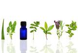 Fototapety Herbs for Healing