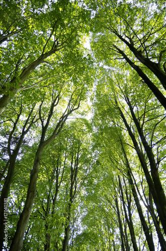 Fototapeten,bäume,blatt,laub,wald
