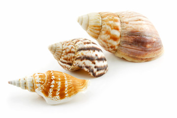 Collection of Seashells Scallop Isolated on White