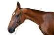 Akhal-teke stallion isolated on the white background