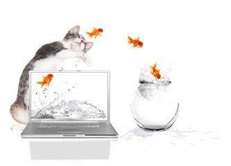 Kitty Pawing at Goldfish Flying Out of Water