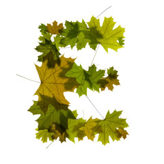 letter E from green maple leaves