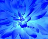 Fototapeta płatek - rozjarzony - Kwiat