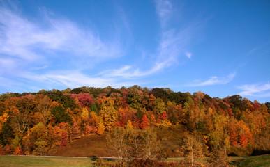 Autumn in Allegheny forest