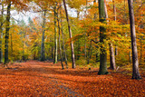 Vibrant image of autumn forest at sunset poster