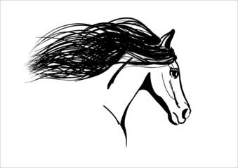 horse. vector