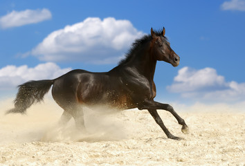 dark brown horse