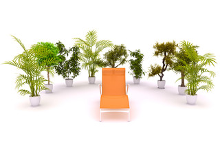 Chair enclosed by plants