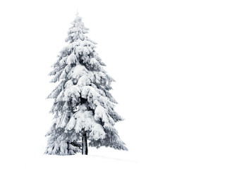 Snowy pine tree isolated on white