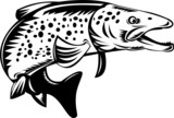 Spotted or speckled  trout jumping poster