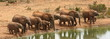 Elephant cows and calves at the waterhole.