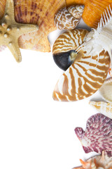 Fondo de Conchas Marinas