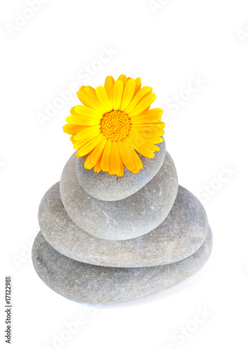 Yellow flower on top of a stack of pebbles