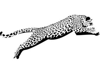 Leopard09