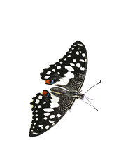 Farfalla_2
