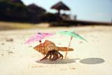 Hermit Crab Beach Bum poster