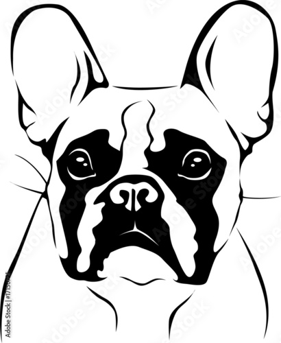 """french bulldog portrait"" stockfotos und lizenzfreie"
