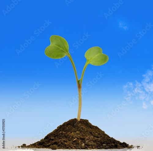 Plante qui pousse de pierre brillot photo libre de droits for Plante qui pousse