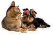 Quadro Puppy and kitten in studio